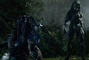 il predator evoluto