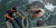 caccia allo squalo