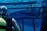47 metri shark cage