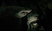 47 metri uncaged shark attack