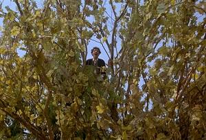 zio teo sull'albero amarcord